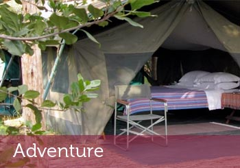 Adventure Stay